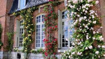 Roseraie du château de Mesnil-Geoffroy